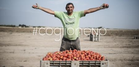coglioneNo Pomodori